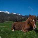 Resting horse at Plastira