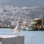 Seagull in Kavala Port