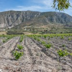 Argyros vineyard