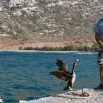 Prokopis, the domesticated cormorant of Apollonia