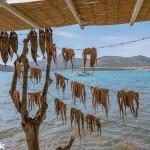 Octopuses being sundried at Kapetan Pipinos taverna