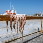 Octopus being sun dried in the port town of Naoussa