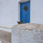 The ubiquitous Cycladic cat